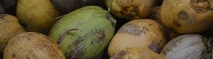 Detailed photo of different coconuts