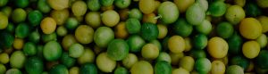 Close up shot of limes