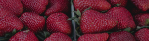 Close up shot of strawberries